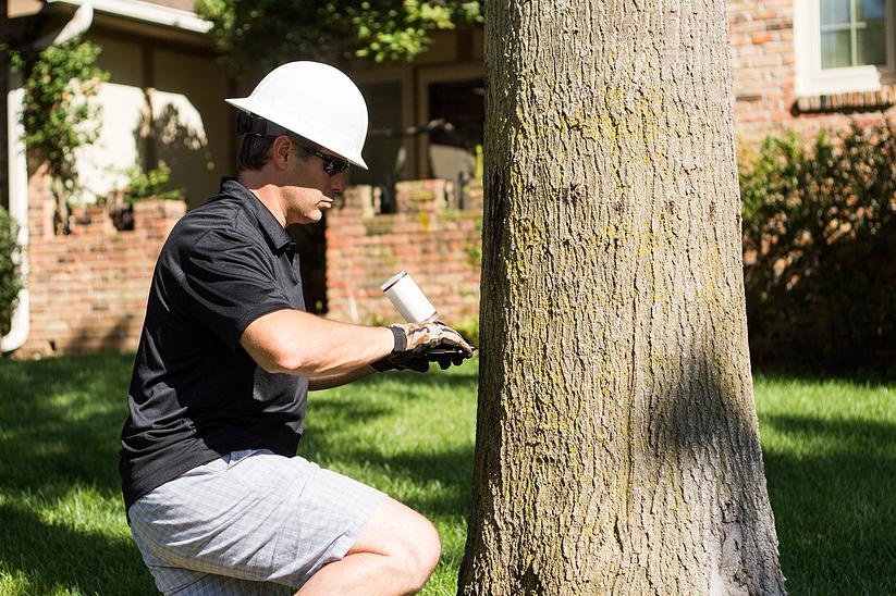 Tree inspections and treatments