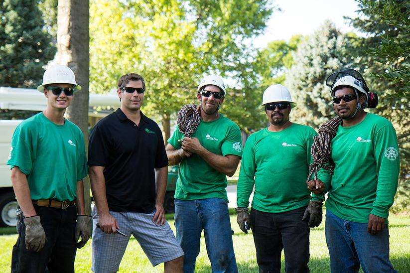 Great Plains Tree Care experts in tree services