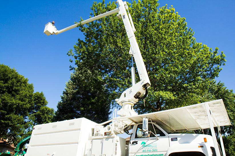 Taking tree services to great heights in Omaha