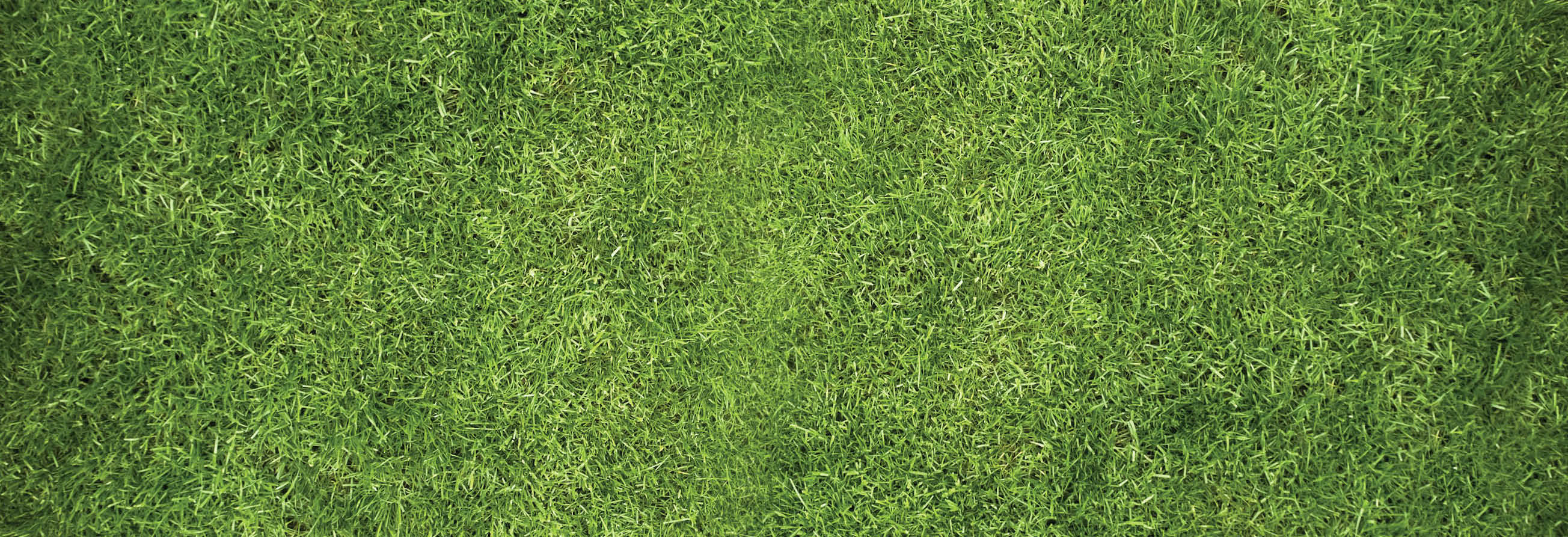 lawn doctor, lawn doctor of lower merion, lower merion, lawn, lawn care, valpak, coupon