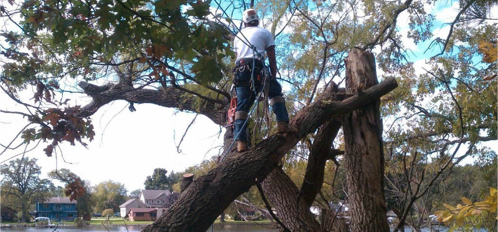 Tree Removal services Waukesha and Milwaukee WI