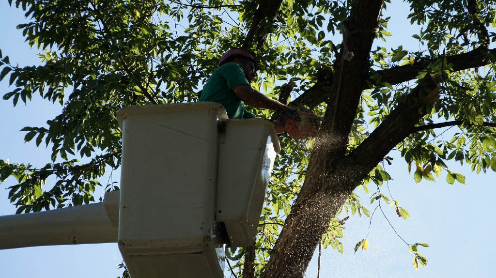 Tree Removal services Waukesha and Milwaukee environmentally responsible
