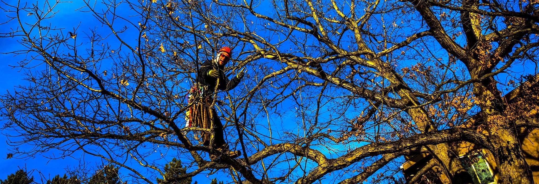 Greenman tree and landscape services Waukesha Milwaukee WI