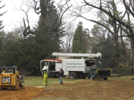 Harford Tree Experts in harford and baltimore county maryland tree trimming services.