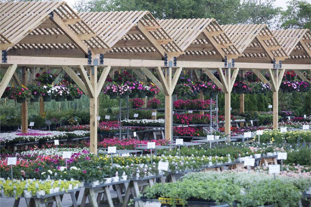 Pansies are at Hart Farm Nursery & Garden Center