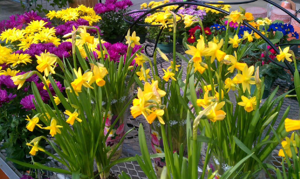 We have a large selection of Proven Winners & other vegetable & flower selections