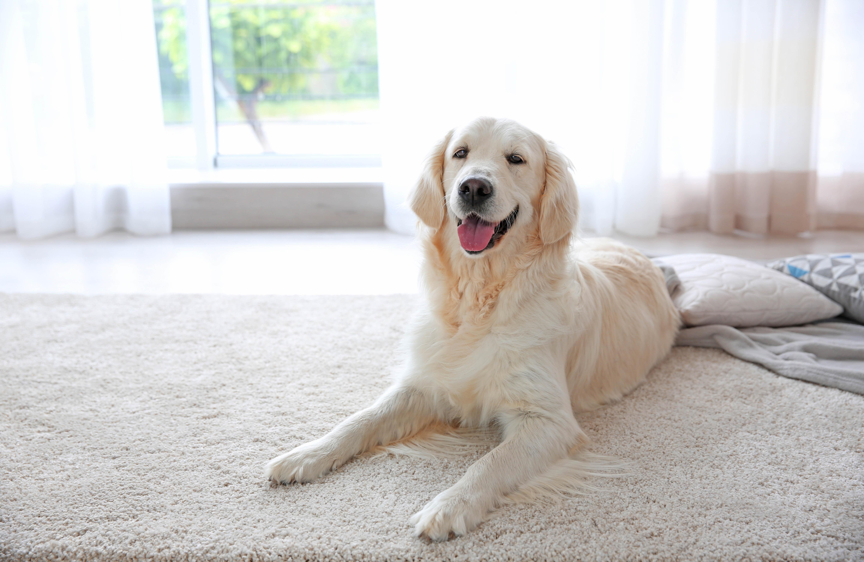 havertown carpet co, havertown carpet, havertown, carpet, carpeting, carpeting coupons, home remodel, living room, family room, flooring, tile