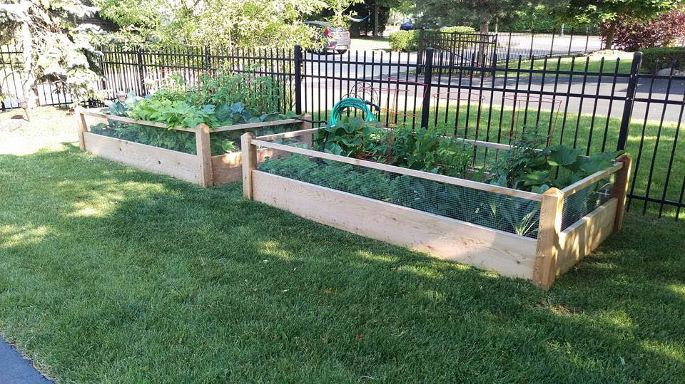 See the accelerated plant growth in a raised bed garden