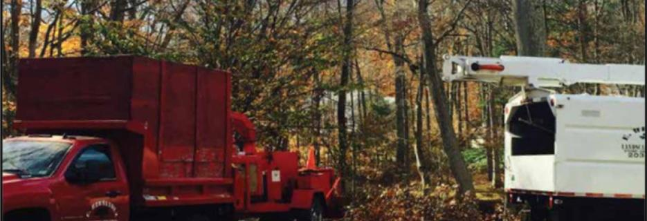 E. Hernandez Trees LLC in CT banner