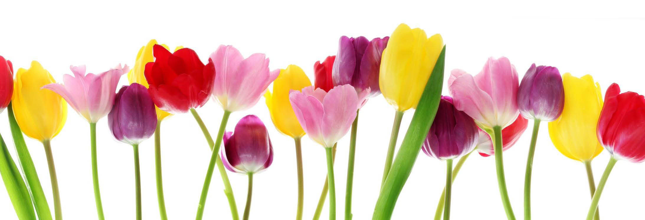 garden, plants,top soil,annuals,perennials,pots,bagged mulch,hillside garden center, hillside garden
