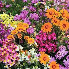 garden seeds,hanging baskets,herbs,vegetable plants,annuals,perennials