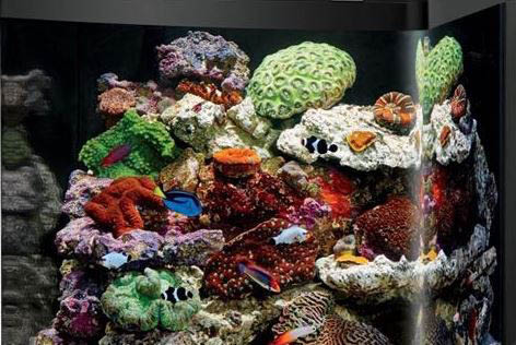 Home reefs saltwater marine fish, supplies and services in columbia, md aquarium