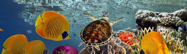 Home reefs saltwater marine fish, supplies and services in columbia, md turtle