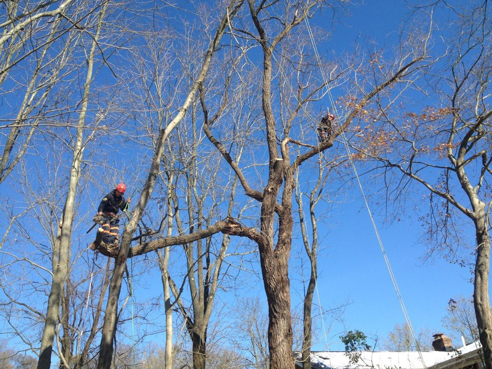 Hufnagel Tree Expert