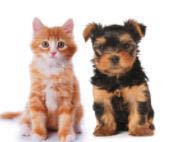 The Hungry Puppy, cat, dog, pet supplies