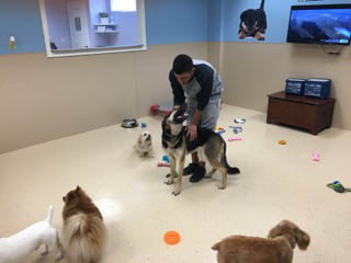 Doggy Daycare in Watchung, NJ - Morris County Doggy Daycare - In My Paws Coupons