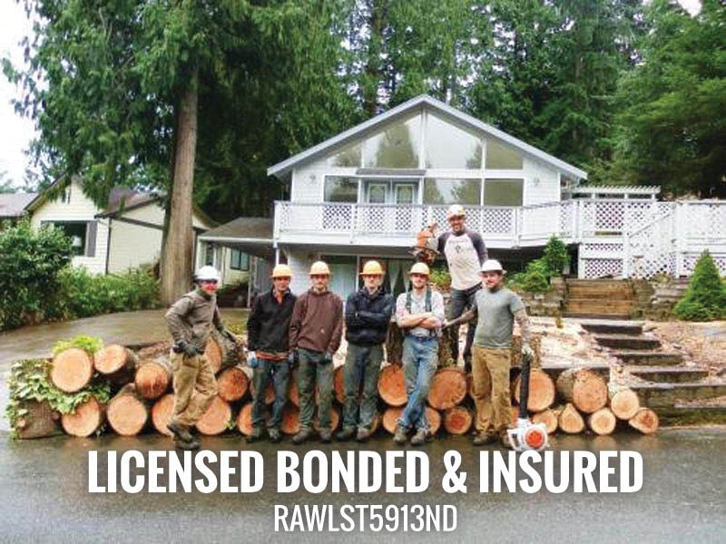 Licensed, Bonded and insured Tree Service in Whatcom county