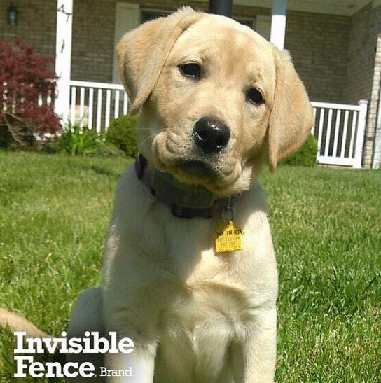 invisible fence of carroll county, md keeping pets safe