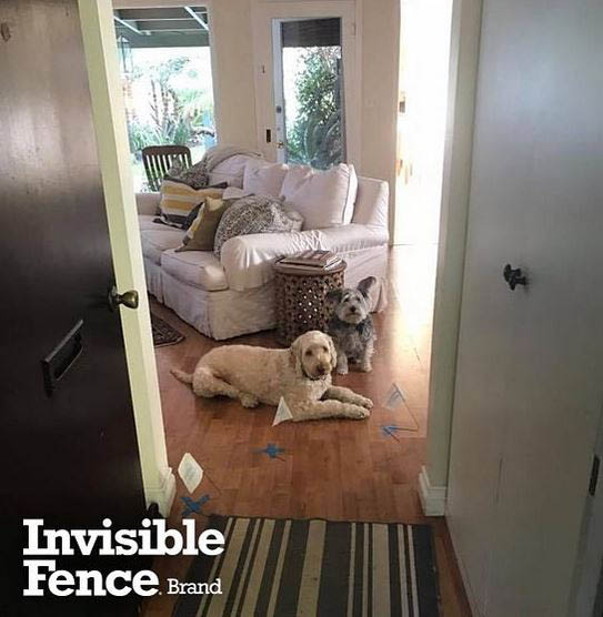 invisible fence of carroll county, md indoor solutions