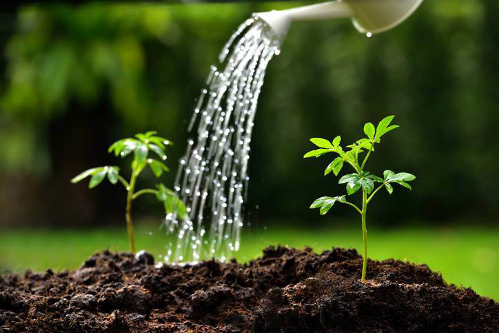 Feeding and watering are important to the health of your trees