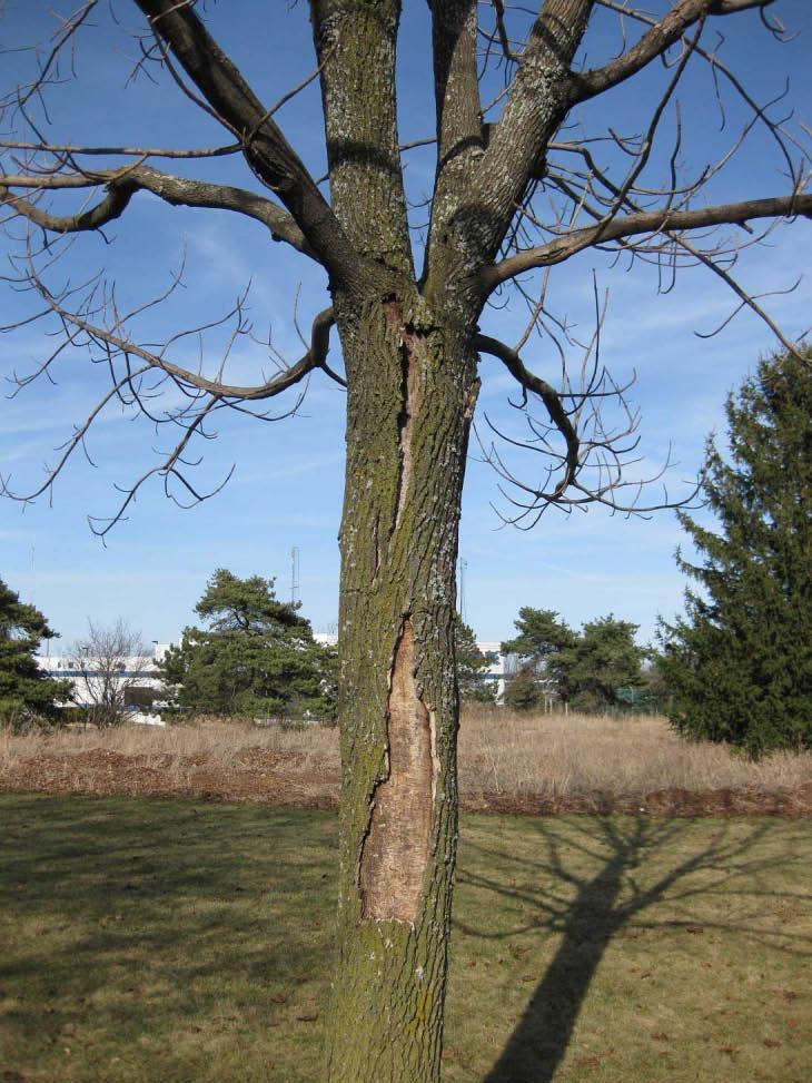 tree removal, restoration, stump grinding