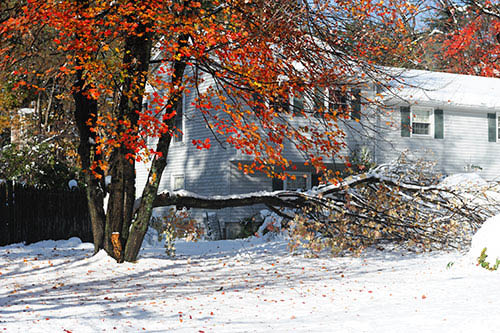 Jet green tree services,tree down,tree removal,power lines,downed tree,stump removal,tree care,