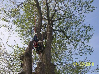 jm tree service tree removal savings rochester ny
