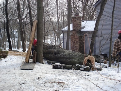 JT Arborists tree removal service in Waukesha County.