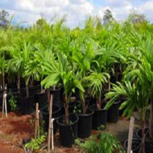 Plant nursery near Mililani