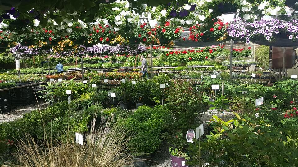 Various plants, shrubs, flowers, and garden supplies at Kelli Green Garden Center in Marietta