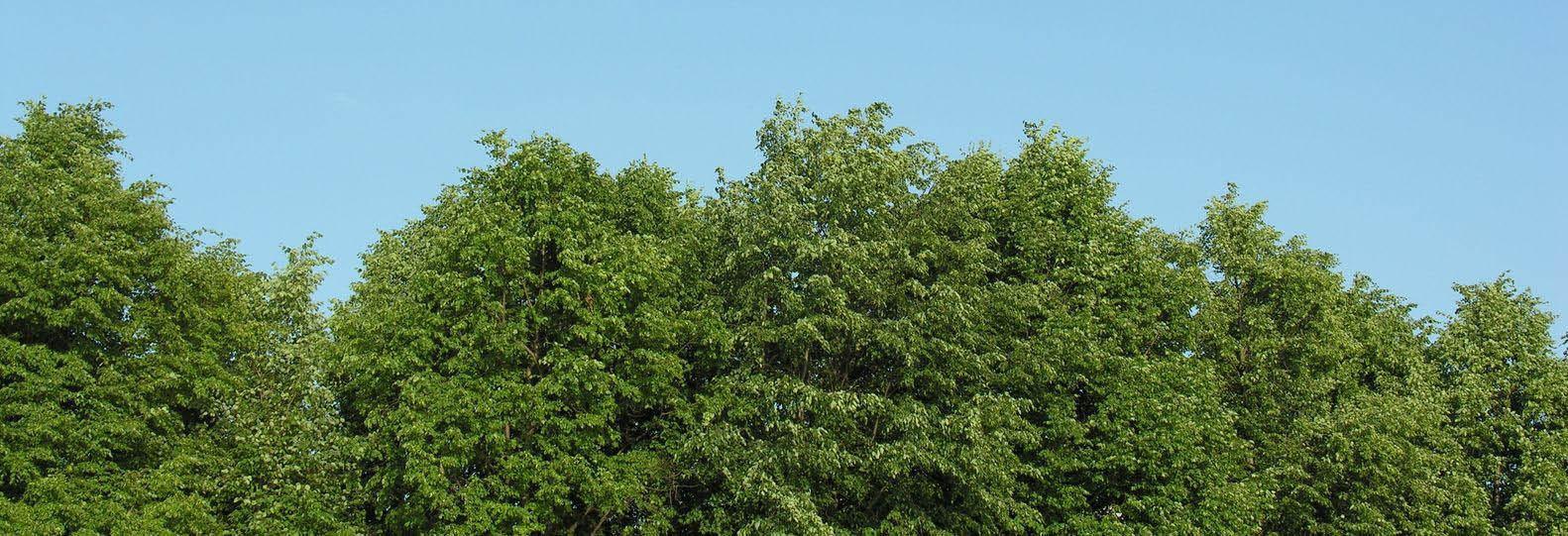 Kingkiner Tree Service, PA, NJ, DE. Tree Removal, Stump Grinding, Pruning, tree coupon