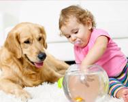 Toddler, dog and goldfish bowl sitting on carpet.