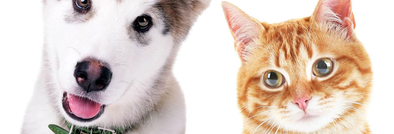 La Pawite Pet Photo