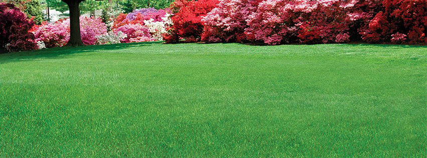 lawn doctor, lawn doctor of lower merion, lower merion, lawn, lawn care, valpak, coupon, summer, spring, savings, discount, yard work, grass, plants
