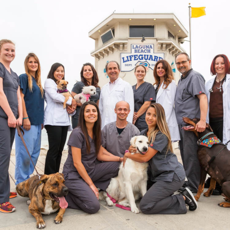 laguna beach animal hospital in laguna beach, ca veterinarian coupons near me pet vet coupons near me