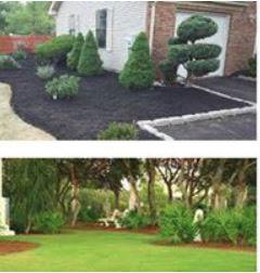 landscape, lawn, grass cutting, curb appeal