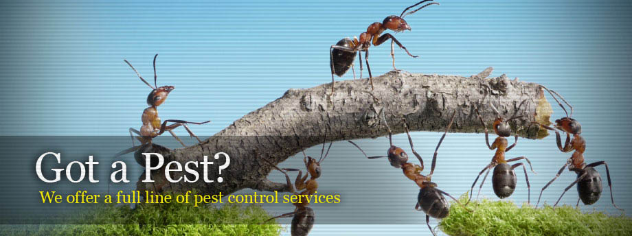 remove pests,lethal pest,lethal pest discounts,exterminator,