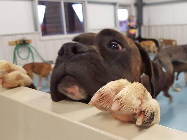 Lucky Bones Pet Resort grooming services
