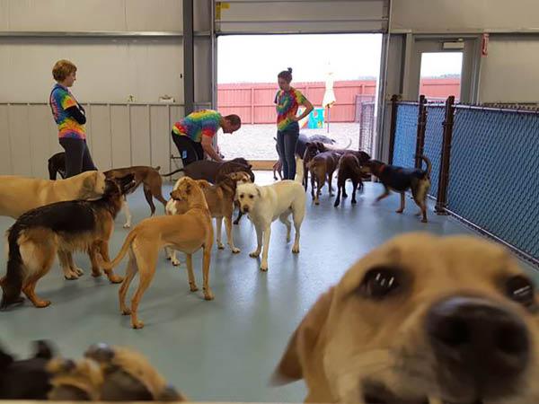 Lucky Bones Pet Resort pet photo bomb