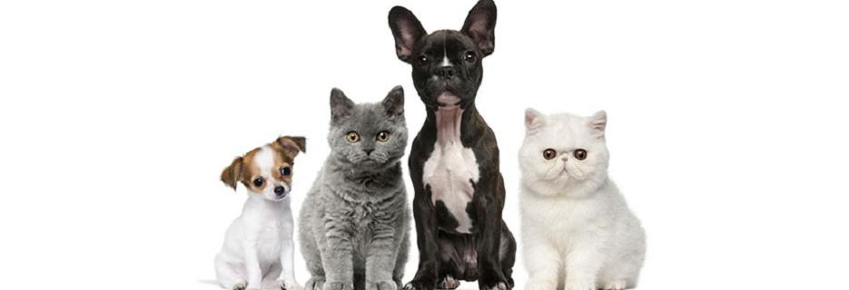 Luv-N-Care Animal Clinic in Naperville, IL banner