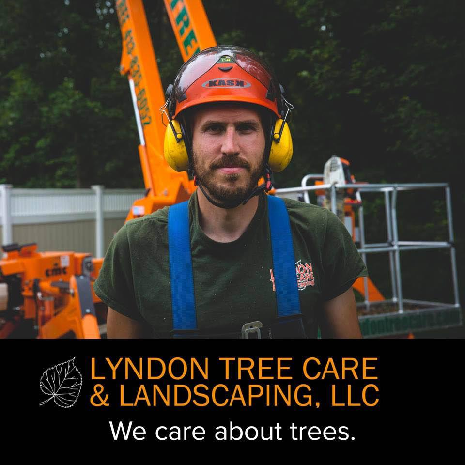 Tree care near Holyoke, South Hadley