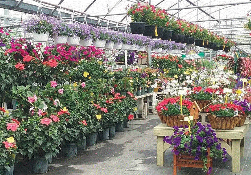 Browse our greenhouse and if you have questions ask our knowledgeable staff at Maeder's Greenhouse in Shelby Twp, MI