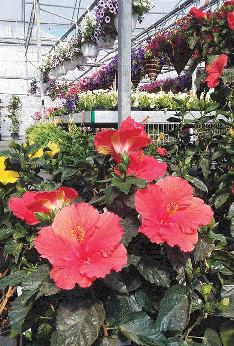Flowers add beauty to your home, come shop at Maeder's Greenhouse in Shelby Twp, MI