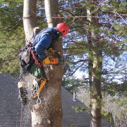 tree cutting; AAA Tree Service Northern Virginia