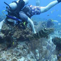 Explore the sea floor on a dive excursion with us