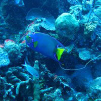 Colorful ocean fish with coral and plant life - scuba diving experiences near Poughkeepsie