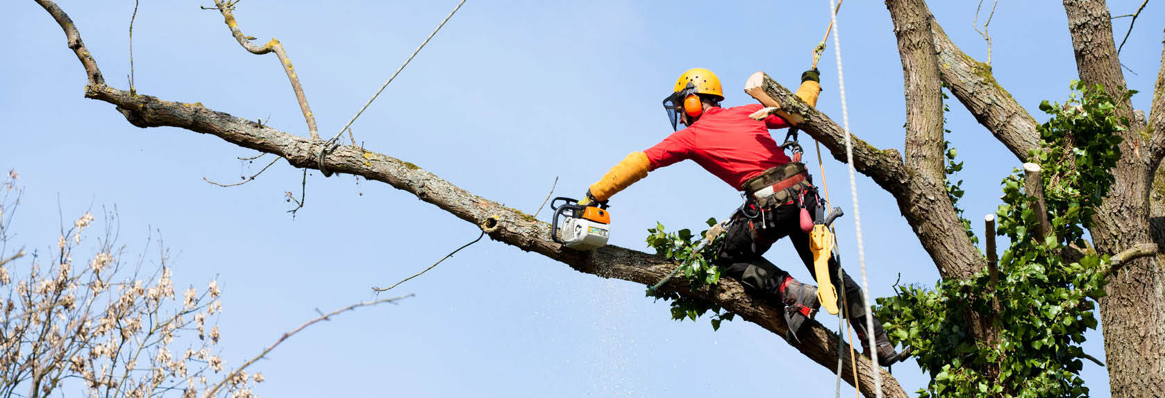 Maryland Tree Care photo