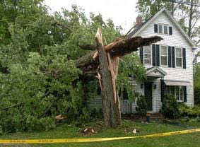 maryland tree care serving central maryland storm damage