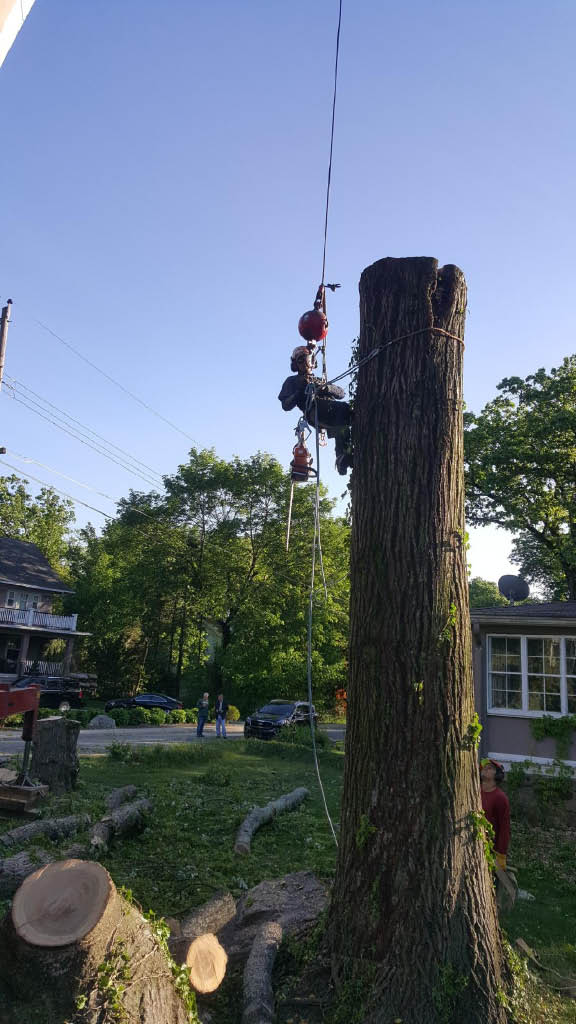 Tree Removal by Mastership Tree and Landscaping in Dover, NJ