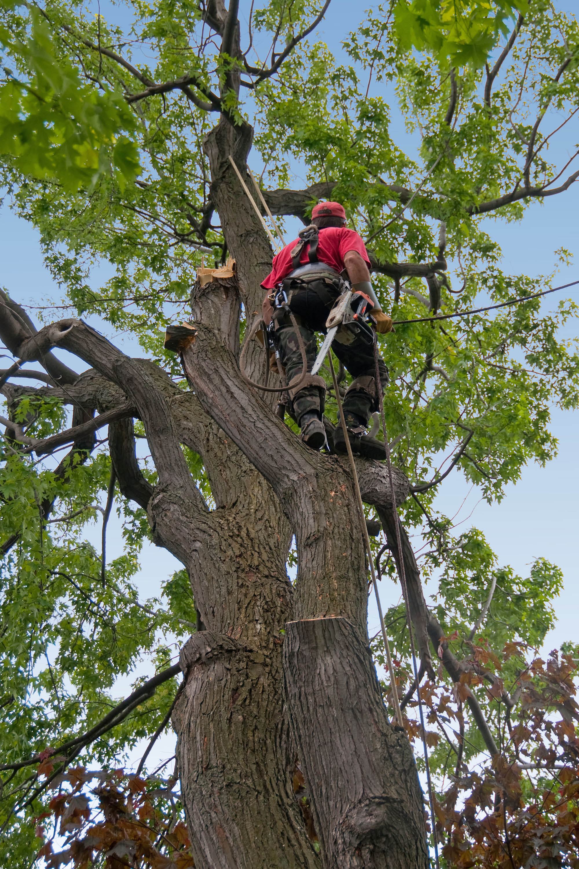 Tree trimming to assist environmental concerns